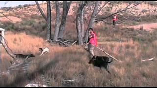 Kansas Quail Hunt Part 2 Oct 2011