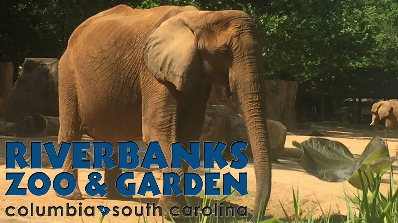 Riverbanks Zoo | Columbia, SC | [April 30, 2017] - YouTube
