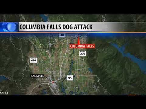 Man arrested, dog shot, in Columbia Falls