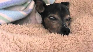 犬にもレム睡眠中があるようですね。 ふだんは、体や顔がぴくぴく動くこ...