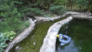 Бассейн-пруд на даче. Можно сделать самому.