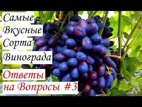 Самые вкусные сорта винограда. Ответы на вопросы #3