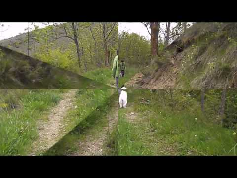 YERUPAJÀ DE LA BORDA D'URTX - 75 days old - PYRENEAN MOUNTAIN DOG