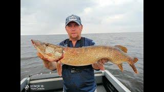 Как поймать крокодила на Рыбинском водохранилище Вечерний жор щуки