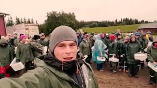 Работа в Финляндии на сборе клубники 2016 Часть 1