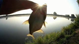 Рыбалка на фидер в июле, на нижней Москве-реке.(Вот и наступил месяц июль, прогноз погоды говорит о спаде жары и предвещает дожди с грозами, что вселяет..., 2016-07-05T15:12:54.000Z)