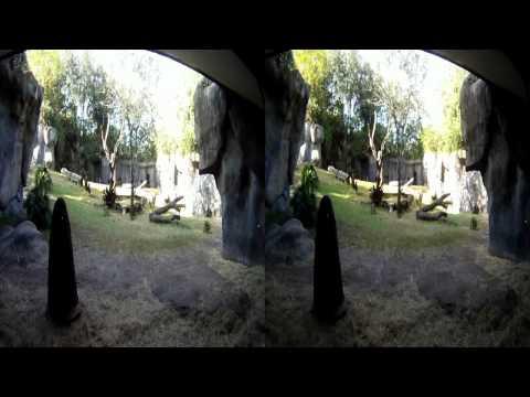 Myombe Reserve Gorilla's HD 3D, Busch Gardens, Tampa Bay, Florida 2011