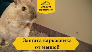 Как защитить каркасник от мышей?? 18+