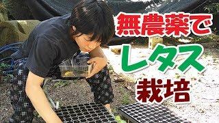 Gambar cover 【無農薬レタス栽培#1】美味タス!!種まき・育苗動画