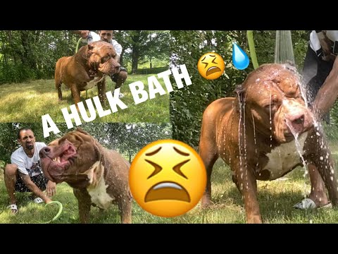 GIVING THE HULK A BATH THIS IS ALWAYS FUN!!
