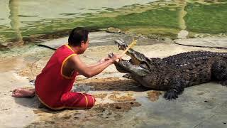 Шоу крокодилов, самая жесть