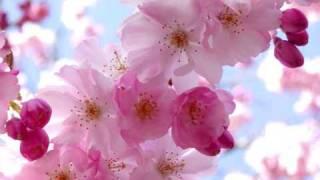 Sebastian Davidson - Cherry Blossom (Spiritchaser remix)