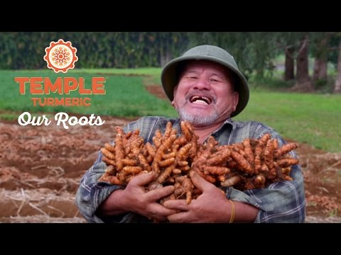 Temple Turmeric - Our Roots