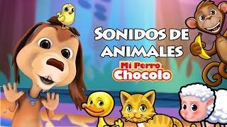 MI PERRO CHOCOLO APRENDE - SONIDOS DE ANIMALES thumbnail