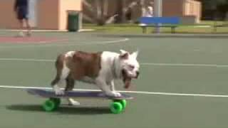 Cute Dog Practising Skateboarding? Funny Yet Skilled Dog
