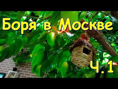 видео: Боря в Москве. Друзья, обучение, покупки. ч.1 (05.19г.) Семья Бровченко.