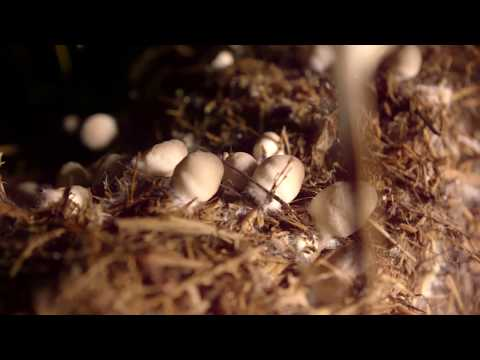 Mushroom Cultivation Program Mp3