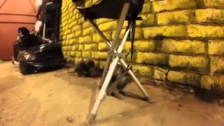 Котятки в гараже