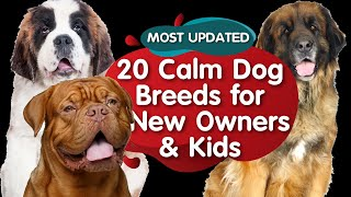Top 20 Calm Dog Breeds for Kids (MOST UPDATED)