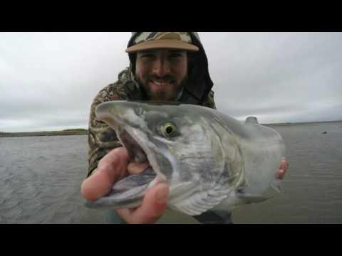 Fly Fishing For Silver Salmon In The Tsiu River, Alaska - Theminnowbucket.net