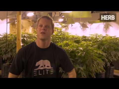 Graham Farrar Has Advice For Cannabis Entrepreneurs