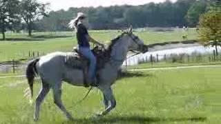 Duke - Grey Quarter Horse Gelding