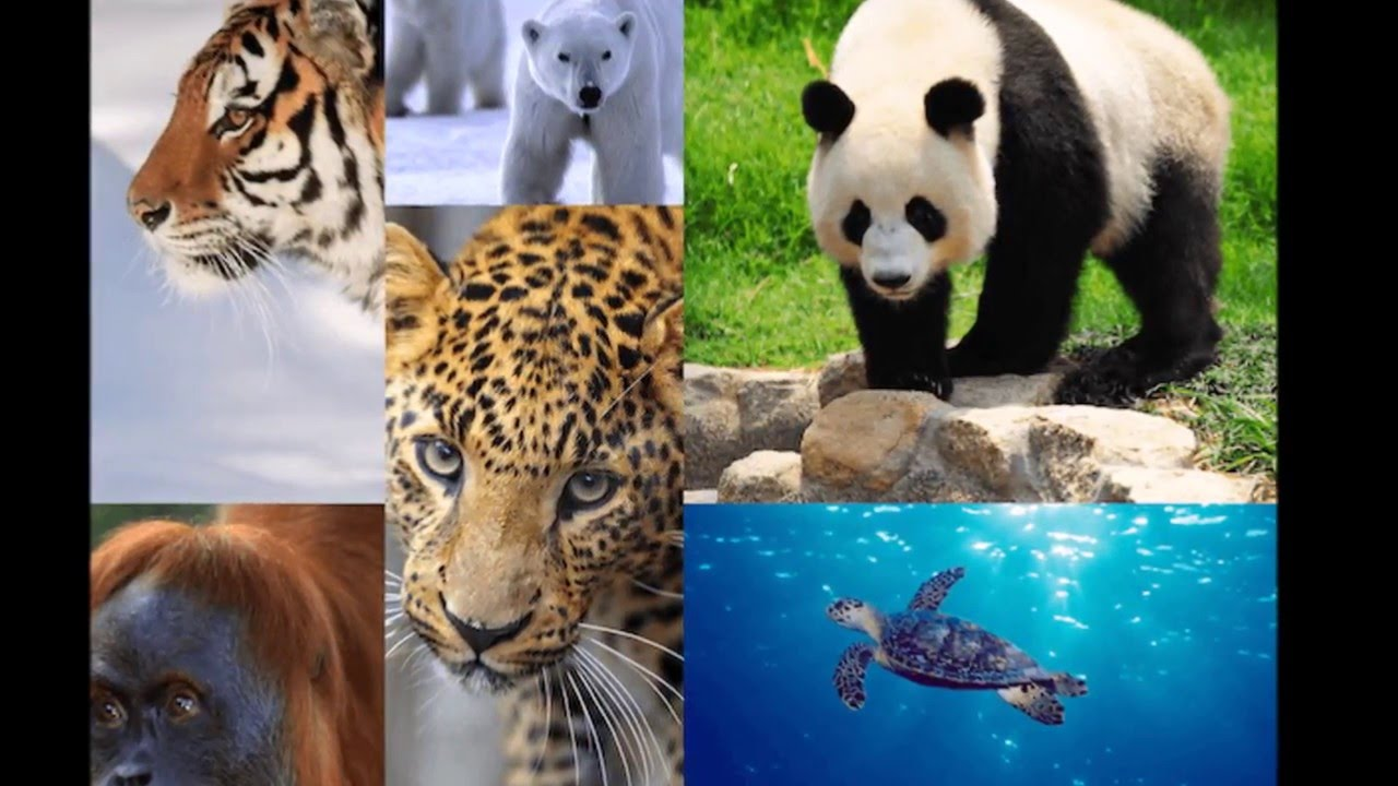 on extinction of animals essay on extinction of animals