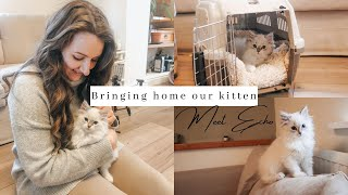 Bringing Home Our Ragdoll Kitten ~ first day at home ~ SO CUTE
