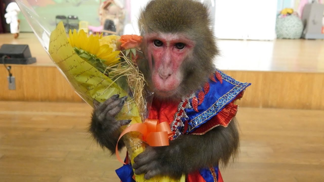 相棒のお猿さんの引退公演初日…様子がおかしい理由に涙が止まらない。