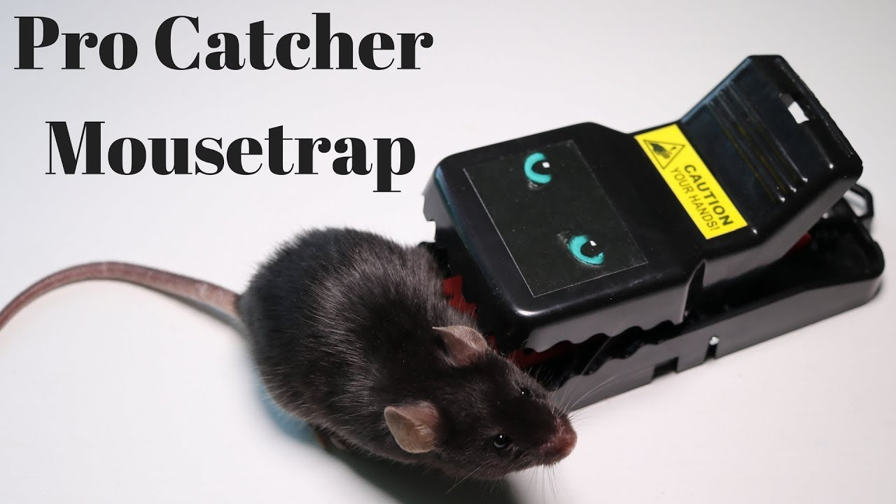 the-pro-catcher-mouse-trap-mousetrap-monday