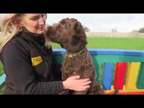 Dogs Trust Bridgend - Alfie