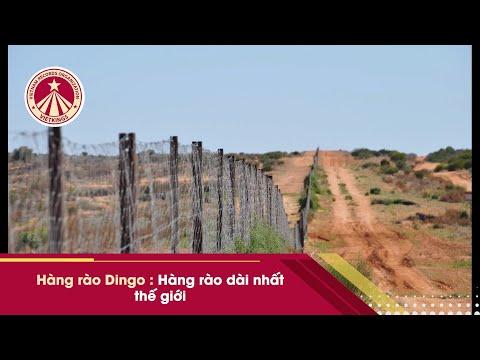 Bản Tin Kỷ Lục: Hàng rào dài nhất thế giới đi bộ 6 tháng mới hết (hàng rào Dingo)