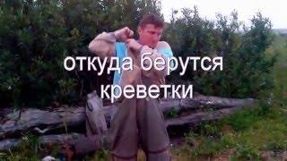ловля креветок в белом море (полная режесерская версия)(ловля рачков для наживки., 2015-12-12T16:14:09.000Z)