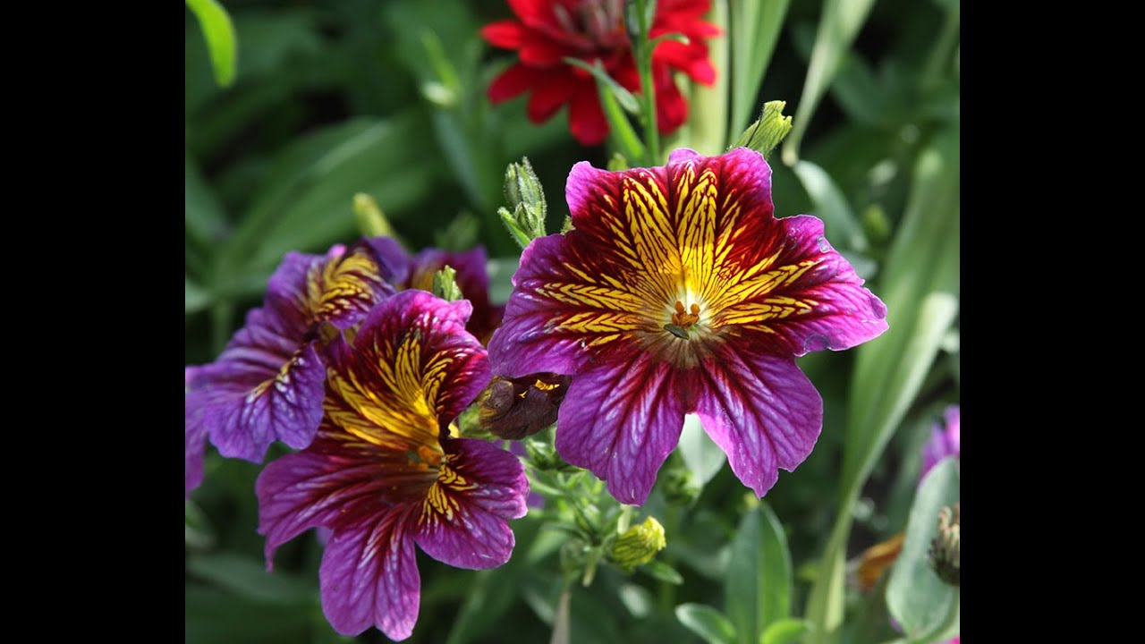 Grow Annual Flowers Everyone Can Grow A Garden 2020 12 Youtube
