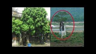 5 loại cây tuyệt đối KHÔNG trồng trước cửa nhà – Bỏ ngay để tránh gặp xui