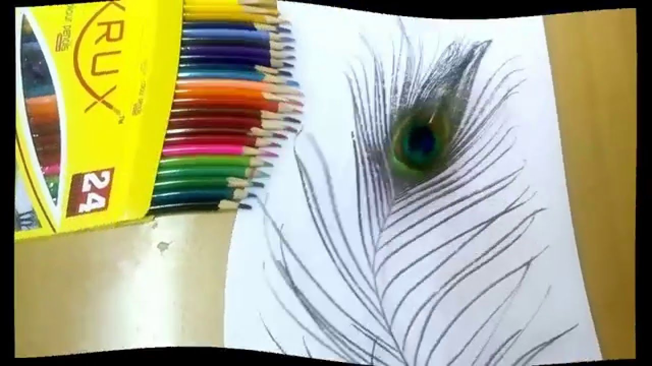 How to draw peacock feathers