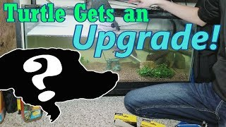 Setting up New and Improved Turtle Tanks!