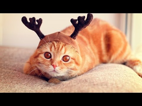 Talented cats - Funny cat Compilation 2017