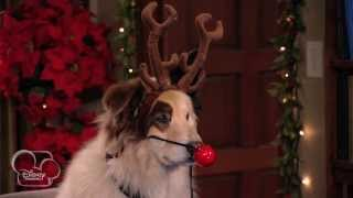 Dog With A Blog - Bark! The Herald Angels Sing