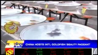 China holds int'l goldfish 'beauty pageant'