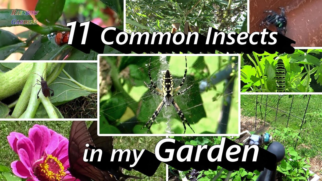 2 Minute Insect ID  11 Common Insects In My Vegetable U0026 Herb Garden