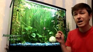 Какие рыбки в моем аквариуме#аквариум 120 литров