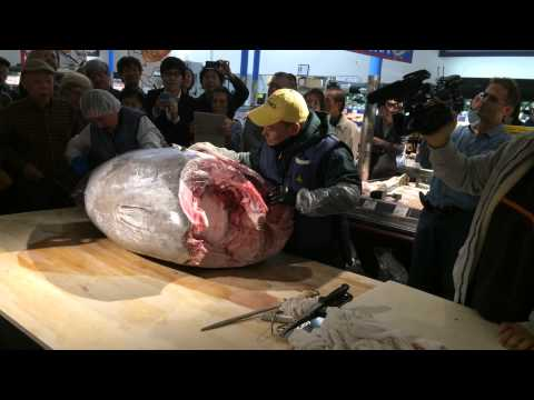 Tuna cutting at Tokyo Central official Grand Opening. まぐろの解体ショー