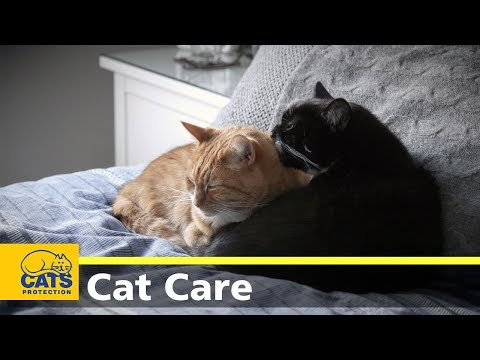 Poisoning in cats | Cat care advice