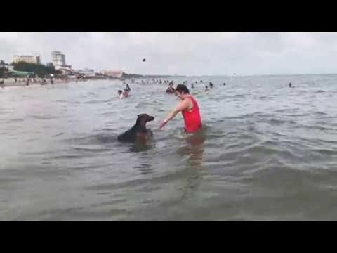 Dog Wants a Swimming Buddy || ViralHog