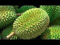 Durian Season in Singapore