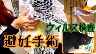 【TNR】保護した黒猫の避妊手術とウィルス検査が完了しました!