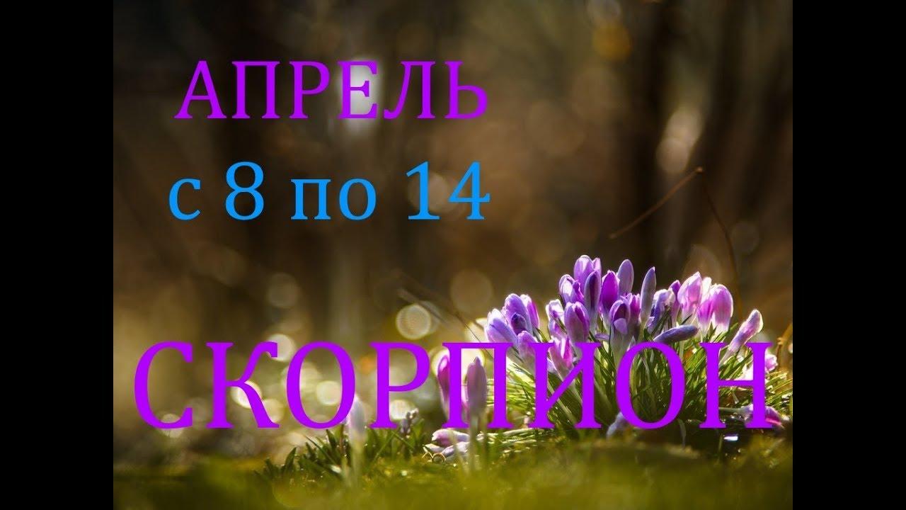 СКОРПИОН. ТАРО-ПРОГНОЗ на НЕДЕЛЮ с 8 по 14 АПРЕЛЯ. 2019год.
