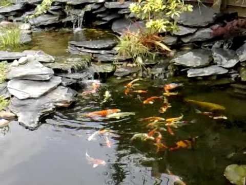 Step by step pond building koi pond in garden with a for Building a koi pond step by step