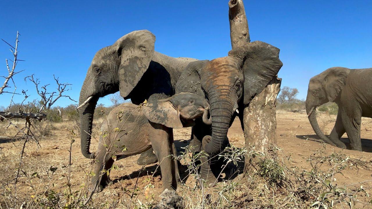 Lundi and the Little Ones | Khanyisa, Timisa & Kumbura and the Lone Tree Stump